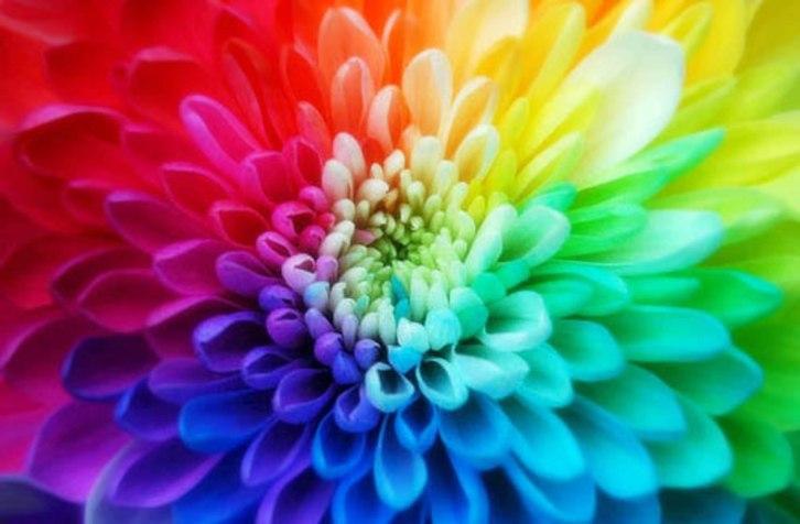 fiore chakra